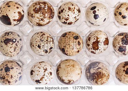 quail egg in box food group raw