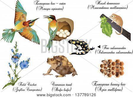 It is illustration of European nature set.