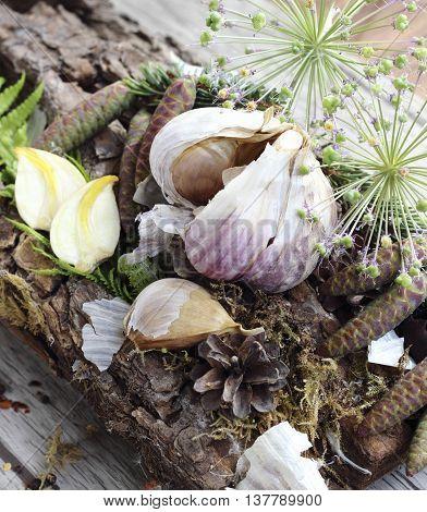 Close up of organically grown dried garlic cloves