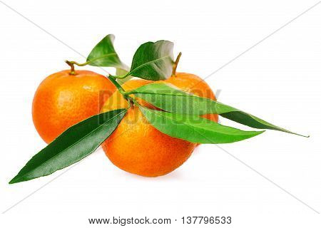 mandarin citrus fruit Isolated on white background