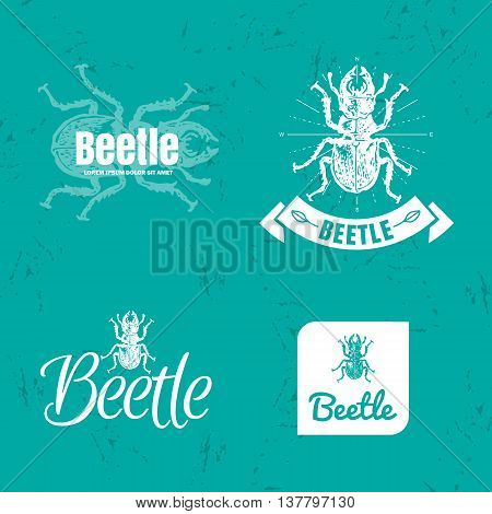 Vector blue and white set with forest stag-beetle. The white beetle as main element of logotypes on blue background. Engraves vector design graphic element emblem logo sign identity logotype