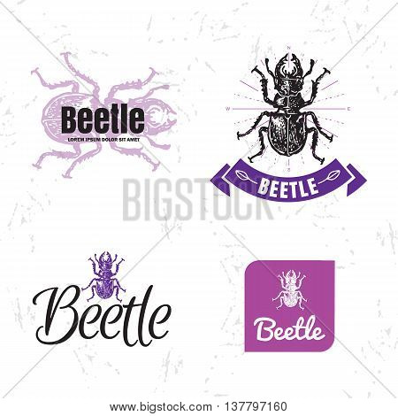 Vector olorful set with forest stag-beetle. The beetle as main element of logotypes on white background. Engraves vector design graphic element emblem logo insignia sign identity logotype