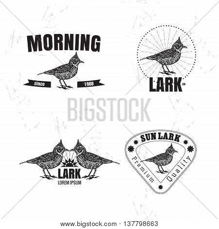 Vector black and white set with desert Crested lark bird. The lark bird as main element of logotypes on white background. Engraves vector design graphic element emblem logo sign identity logotype