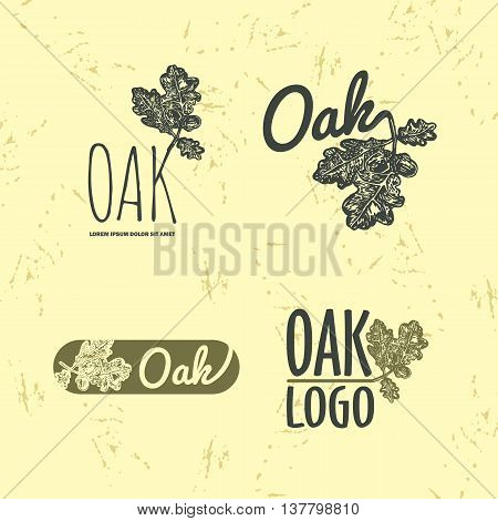 Vector colorful set with oak leaf and acorn. The oak leaf as main element of logotypes on beige background. Engraves vector design graphic element emblem logo sign identity logotype