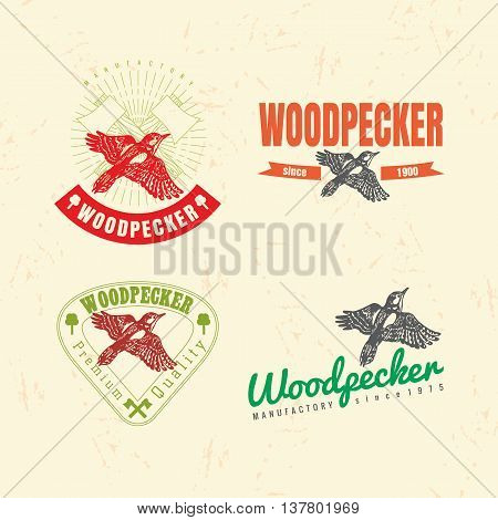 Vector colorful logo set with forest woodpecker bird. The woodpecker bird as main element of logotypes on beige background. Engraves vector design graphic element emblem logo sign