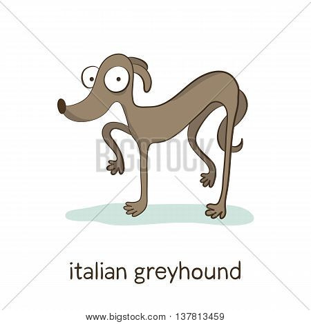 Italian Greyhound. Dog Character Isolated On White