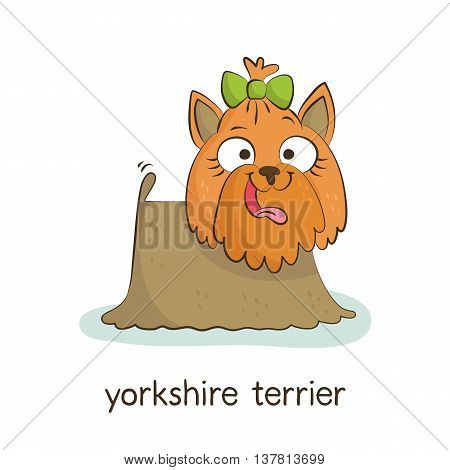 Yorkshire Terrier. Dog Character Isolated On White