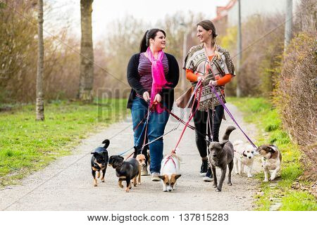 Dog sitters walking their customers