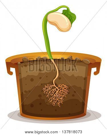 Seed germination in clay pot illustration