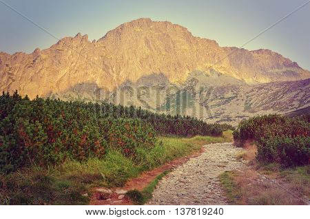 Summer mountain landscape in vintage style. Mountain trail and peaks.