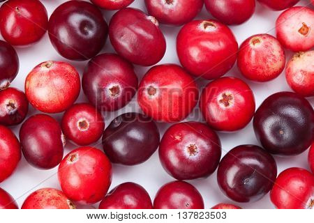 Wild cranberry color variation. Red, ripe cranberries macro view. copy space. up view