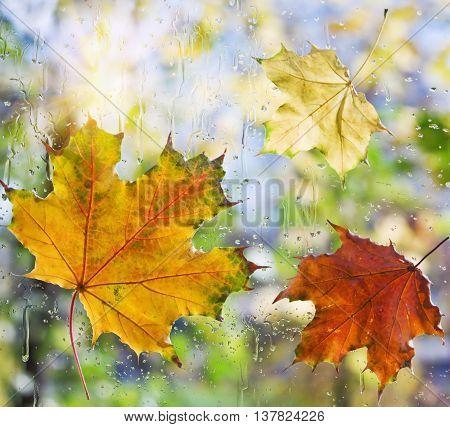 Fallen autumn leaves on wet from rain glass