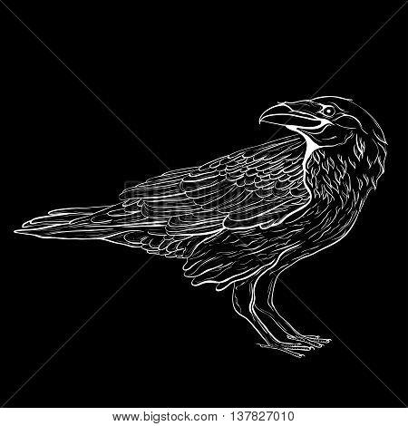 Highly detailed raven sketch on black background