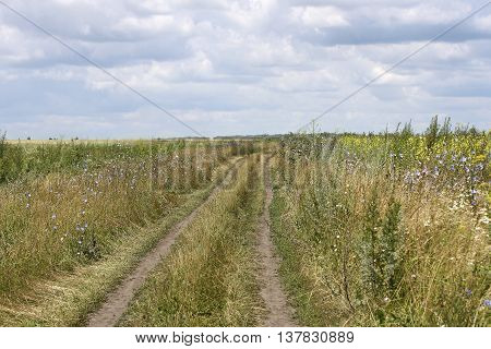 Rural landscape. Thumb wheel road among the dense green grass field. The road runs away to the horizon.