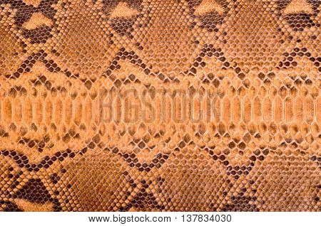 Subsequently painted natural python skin close up