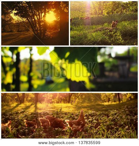 Countryside Scenic Environment Collage Image