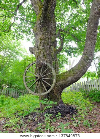A rustic cartwheel hanging from a tree. Lush green foliage.