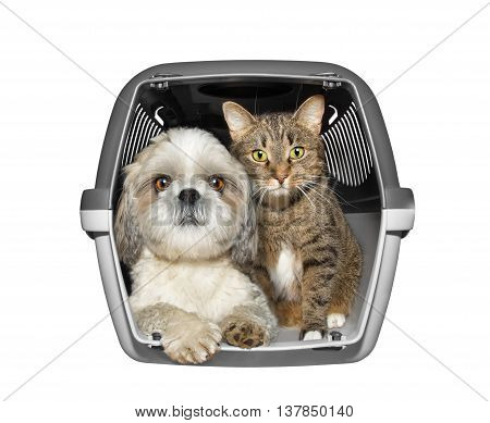 Dog and cat are sitting in the container box -- isolated on white