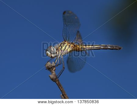 Dragonfly on a stock that is looking for a bug to eat