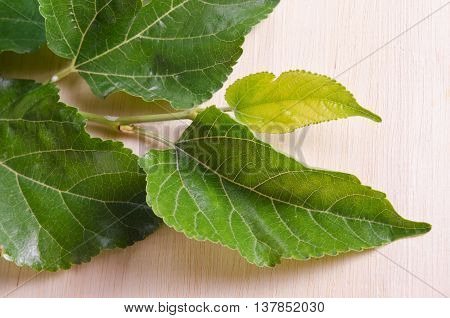 Mulberry Leaf Isolated On Wood Background