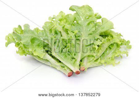Salad Vegetable Leaf Isolated On White Background