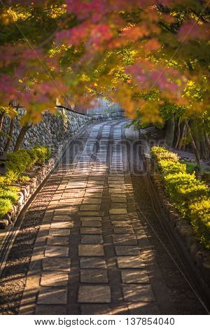 Highly detailed image of autumnal alley very soft focus