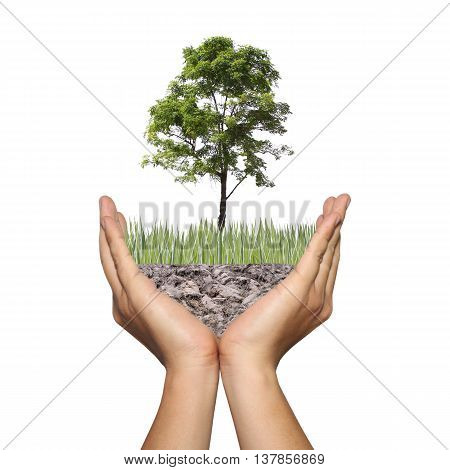 A tree on ground in the hands of menPhoto montage showing in concept of global warming and conserve forest natureBeautiful world with our hands.