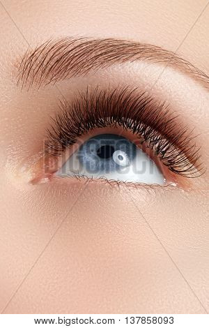 Macro Shot Of Woman's Beautiful Eye With Eyelashes