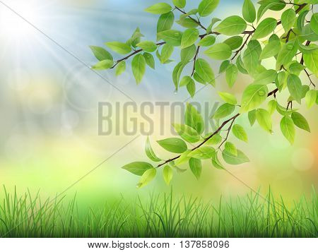 Green leaves with water drops and grass. The sun rays shine through the branches of trees. Summer morning calm nature scene. Realistic detailed vector illustration.