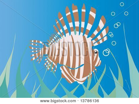 Vector illustration of sea hedgehog under water