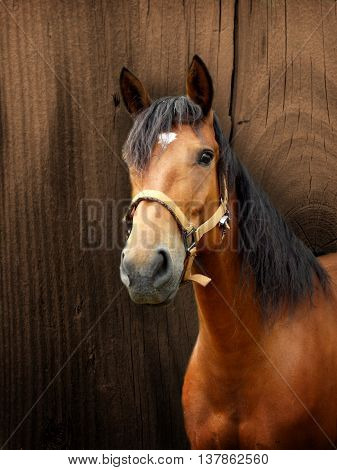 Beautiful brown horse with wooden background photo