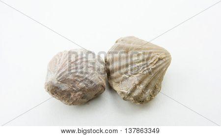 Macro Photo Of Seashells