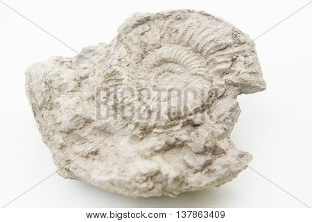 Macro Photo Of Fossil