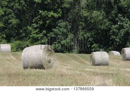 Freshly cut and baled round hay bales in a small farmers field