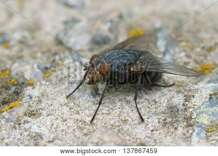Small fly sitting on a stone .