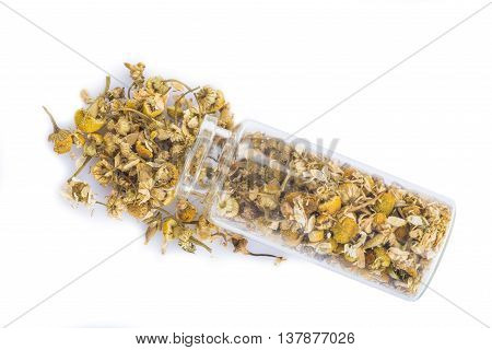 Camomile Isolated On A White Background