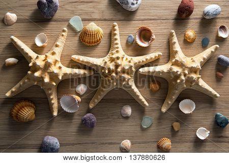 Beautiful background of sea shells and starfish