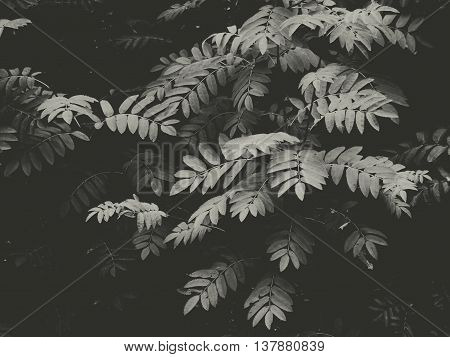 Leaves in the rainforest tropics tropical climate bloom season summer black white style minimal nature