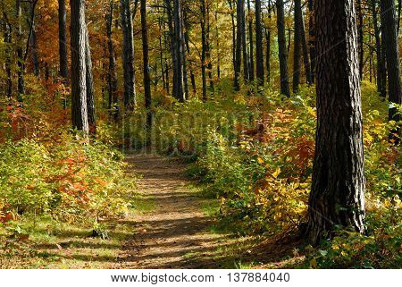 Path in autumn forest during sunny weather