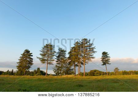 Trees in nature landscape in French Limousin