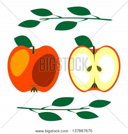 Vector fruits illustration. Detailed icon of red apple with leaves whole and half isolated over white background. Series of fruits and vegetables