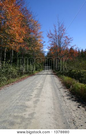 Backwoods Road - Autumn In Maine