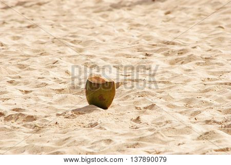 Coconut on the sand of Punta Cana beach in the Dominican Republic