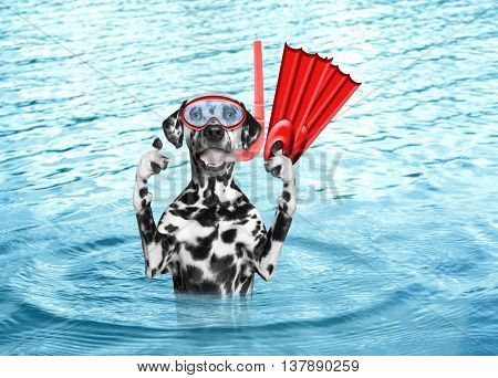 Dog diving on summer holidays in the sea or ocean