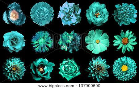 Collage Of Natural And Surreal Turquoise Flowers 15 In 1: Peony, Dahlia, Primula, Aster, Daisy, Rose