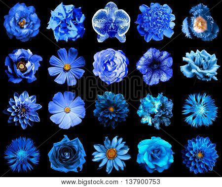 Collage Of Natural And Surreal Blue Flowers 20 In 1: Peony, Dahlia, Primula, Aster, Daisy, Rose, Ger