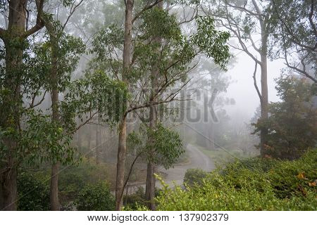 Fogged In At Mount Lofty Botanic Garden, South Australia