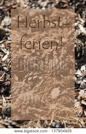 Vertical Texture Of Fir Or Pine Cone. Autumn Season Greeting Card With Copy Space For Free Text. German Text Herbstferien Means Fall Break