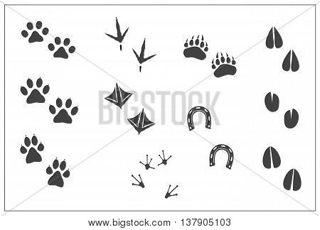 Animals footprints- cat paw, dog paw, bear paw, birds- chicken feet, duck feet, horseshoe, artiodactyls hoofs- deer, antelope, sheep, giraffe, goat, cow, llama, elk, frog feet. Isolated illustration vector