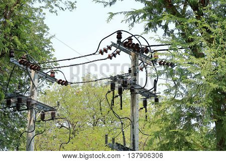 electricity poles near trees in the background
